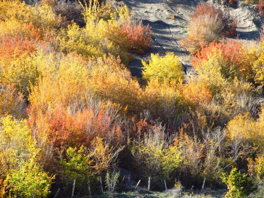 پاییز ولشت