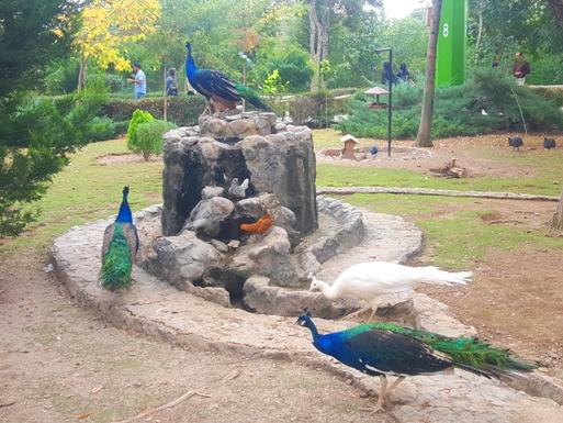 محوطه باغ پرندگان