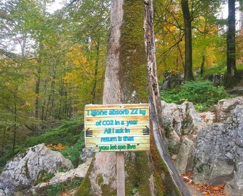 درخت حامی محیط زیست
